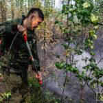 Финансирование охраны лесов от пожаров в Якутии увеличили на 1,1 млрд рублей